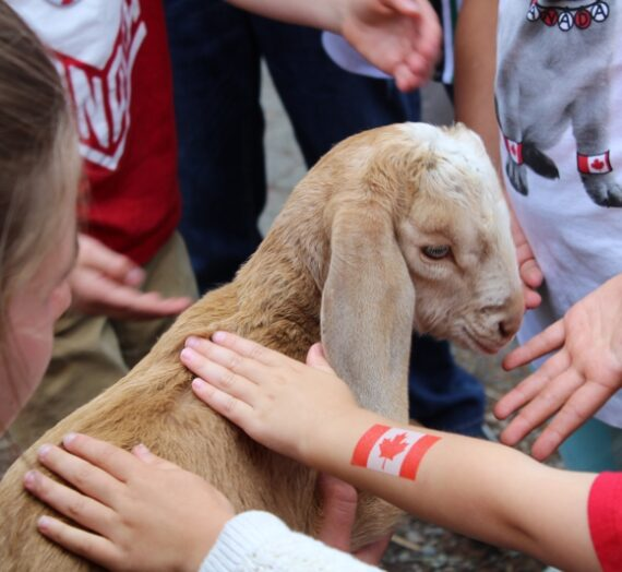 Aldor Acres is back with their petting zoo   Children Friendly Farm Animals