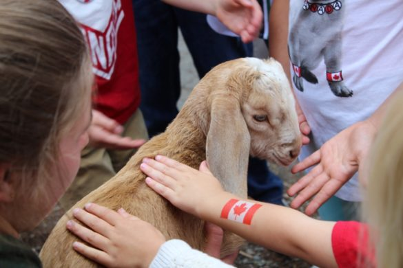 Aldor Acres is back with their petting zoo | Children Friendly Farm Animals